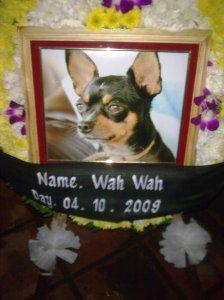 Wah Wah the wonder dog.
