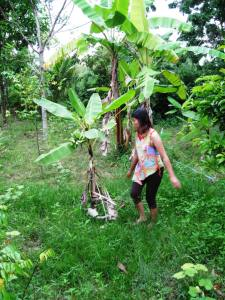 Mak's wife hand picks my banana tree