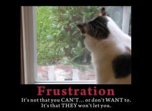 FrustrationDaisy1