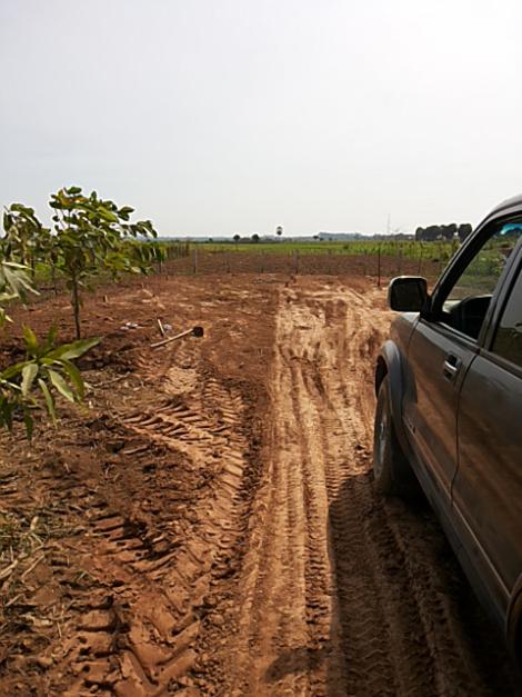 dirt (5)